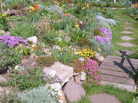 steingarten pflanzenauswahl welche steingarten pflanzen hausgarten net