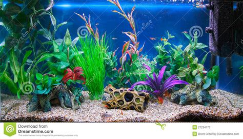 Home Design 3d Gold For Pc Free Download tropical fish tank aquarium stock image image of water