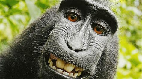finger monkey wallpaper  images