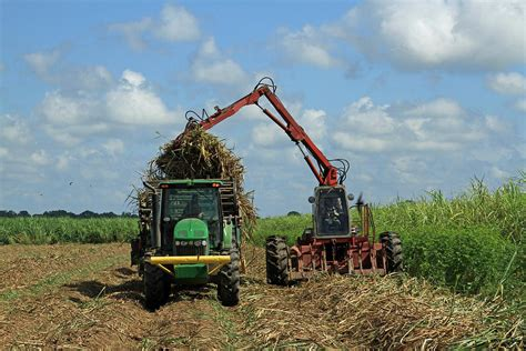 Sugarcane Planter by Sugarcane Planter Photograph By Ronald Olivier
