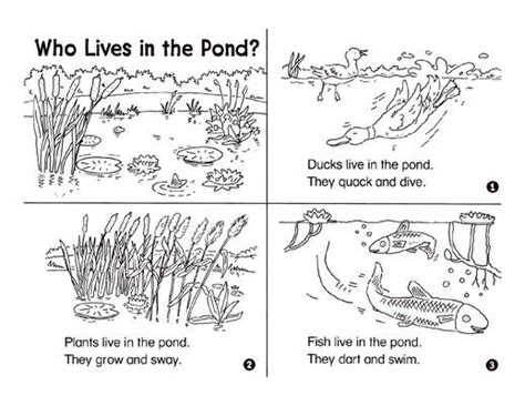 the white of pond bank books minibook who lives in the pond the plant dr who and