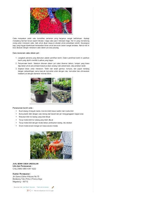 Jenis Bibit Seledri Unggul 0856 4347 4222 jual benih sayuran benih sayuran unggul
