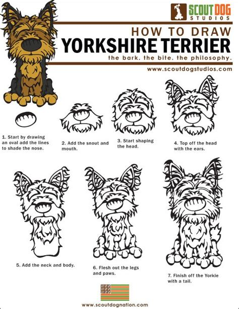 how to draw a yorkie easy how to draw terriers yorkies the how to draw yorkies pdf