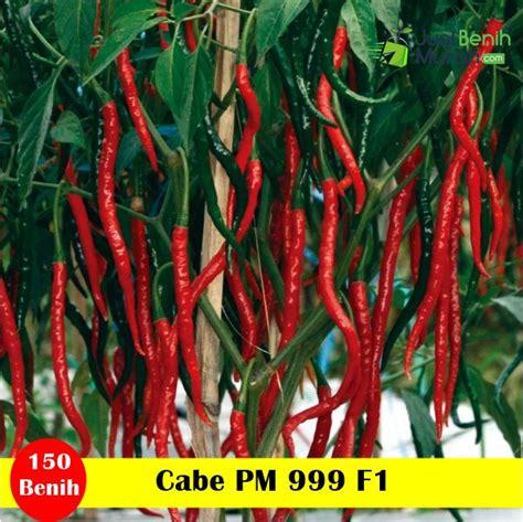 Bibit Cabe Tm 999 benih cabe pm 999 f1 25 gram panah merah jualbenihmurah