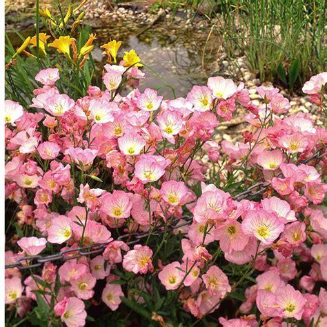 Blumen Stauden Halbschatten by Naturagart Shop Sonnen Stauden Niedrig 50 Kaufen