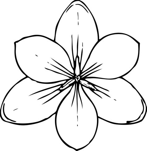 flower template cut out coloring home