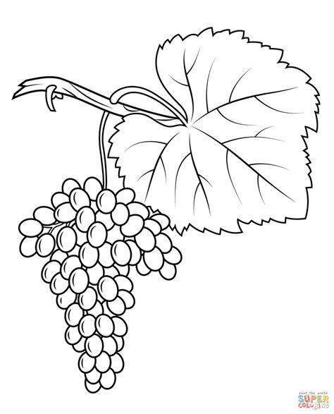 grape leaves coloring pages grapes coloring pages free coloring pages grape leaf
