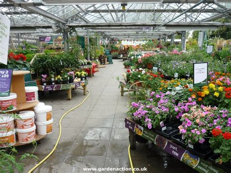 nursery layout for plants notcutt bagshot garden centre