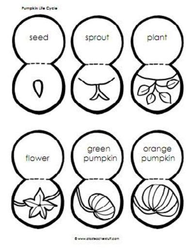 coloring pages of life cycle of pumpkin pumpkin life cycle preschool items juxtapost