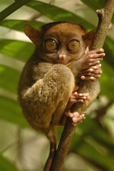the smallest creatures a fateful road trip of murder mystery and suspense books my precioussssss tarsier critters bohol