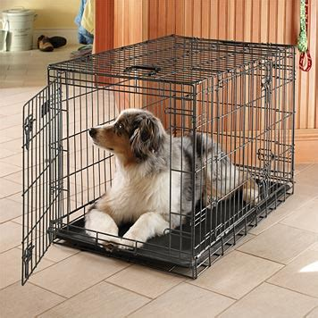 puppy keeps in crate foldable crate metal crate metal crate orvis