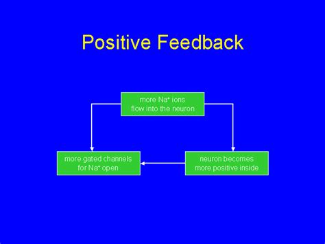exle of positive feedback resting and membrane potentials