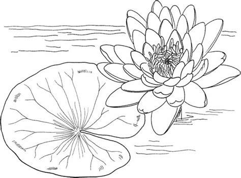 desenho de flor da vit 243 ria regia para colorir tudodesenhos
