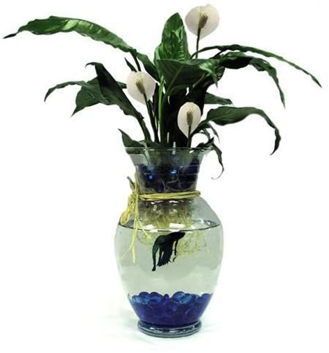 Fish Flower Vase by Betta Fish With Green Plant Blossomflower