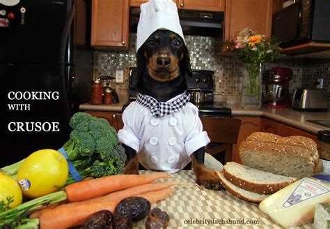 cooking dogs s day cupcakes chef crusoe dachshund