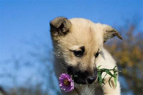 keep dogs out of flower beds tips to keep dogs out of flower beds pets