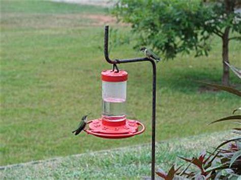 how to hang a hummingbird feeder garden guides