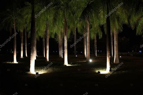 illuminazione alberi illuminazione di alberi nel parco pubblico di notte foto