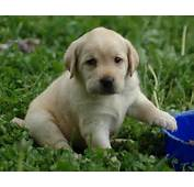All Wallpapers Beautiful Dog Hd