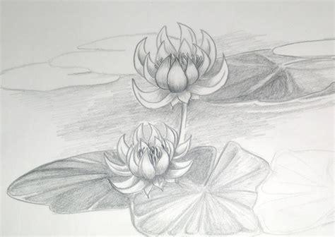 sketch lotus by dvyrelestat on deviantart