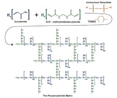 Mba Crosslinker Percentages In Acrylamide Gel the polyacrylamide matrix eco textile information