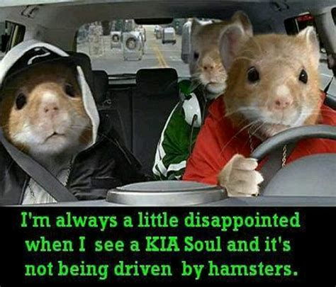 What Are The Animals In The Kia Soul Commercial No Hamsters Hamsters