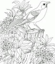 garden coloring free secret garden coloring pages