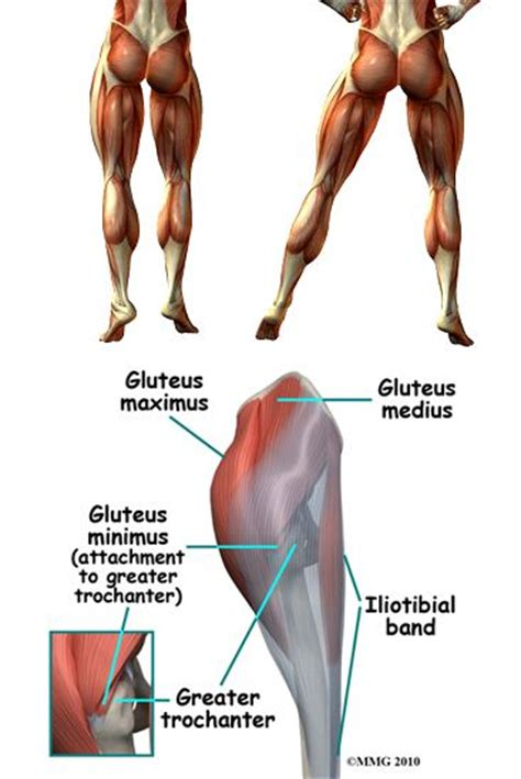 glute muscles diagram lift n it roll a glutes anatomy