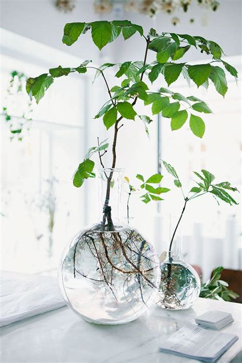 Glass Planter by Diy Home Inspo Glass Vases A Pair A Spare