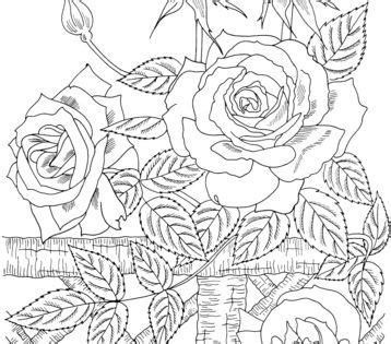 america climbing rose coloring page  roses category