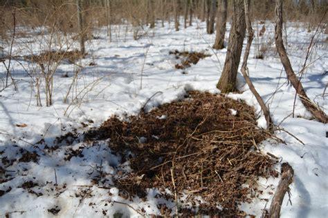hunting bed sets deer hunting bedding area strategies head hunters tv