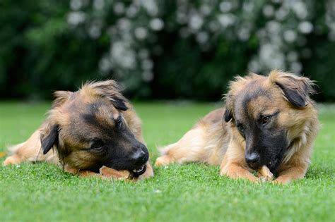 how often should puppies be fed how often and how much should i feed my petspot