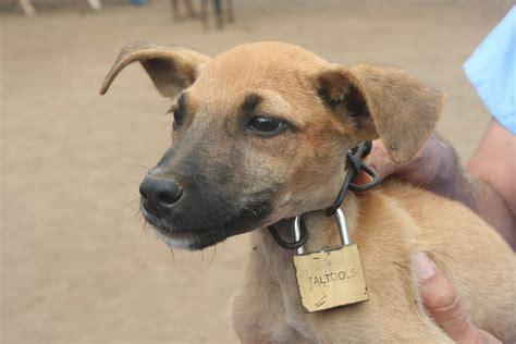 puppy lock lock related keywords suggestions lock keywords