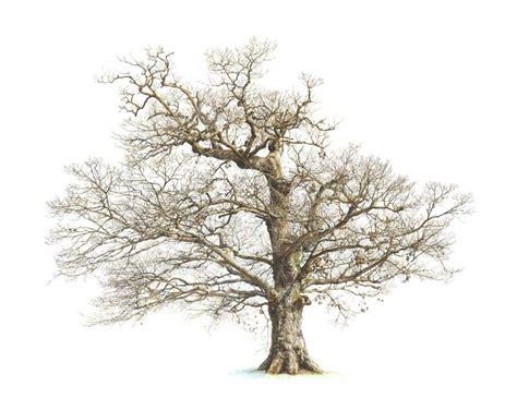 tree drawing best 25 oak tree drawings ideas on tree