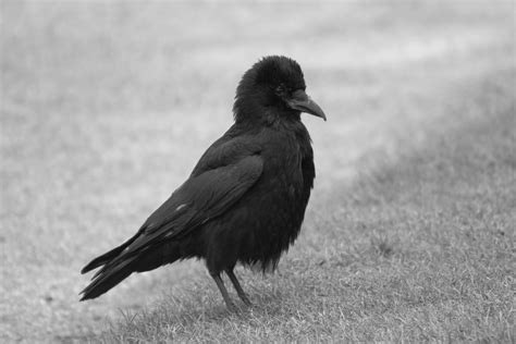 White Bird Black Bird free stock photo of beak bird black and white