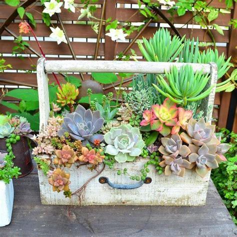 Ideas For Indoor Succulents Design Stunning Ideas For Indoor Succulents Design Best Ideas About Indoor Succulents On