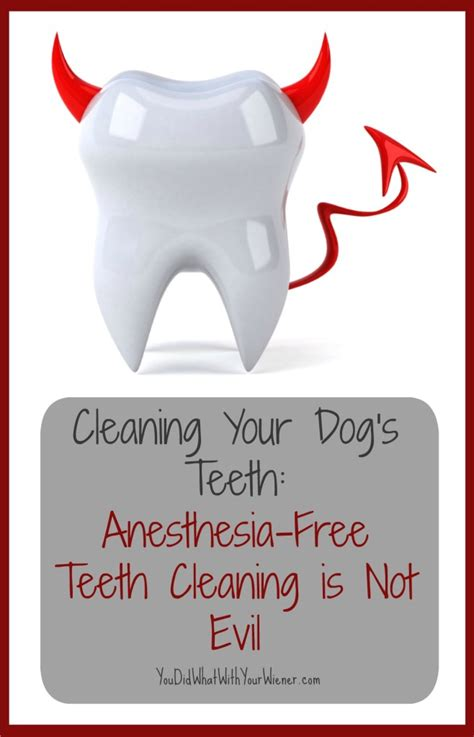 anesthesia free teeth cleaning cleaning your s teeth anesthesia free teeth cleaning is not evil
