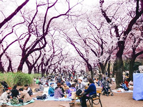 Bathtub Surrounds Where To Experience The Cherry Blossoms In Tokyo