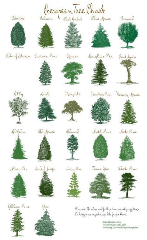 different types of trees pictures to pin on pinterest rustic evergreen tree table number cards by