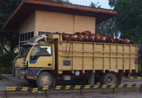 Minyak Kelapa Sawit Per Ton teknik pertanian universitas sriwijaya proses pengolahan kelapa sawit menjadi cpo