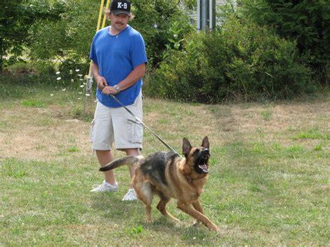 german shepherd service francis german shepherd service dogs breeds picture