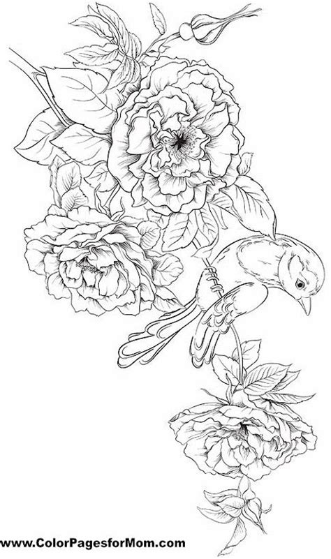 grown up coloring pages of flowers coloriage coloration and oiseaux on pinterest