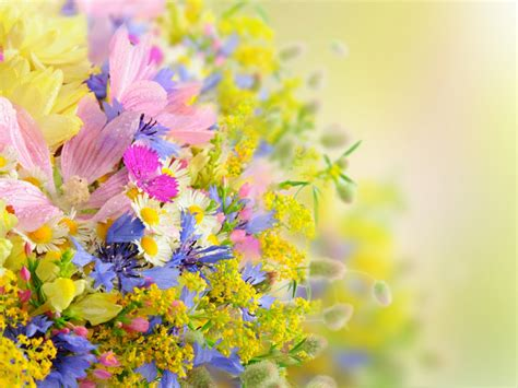 blooming flowers blooming flowers one hd wallpaper pictures backgrounds