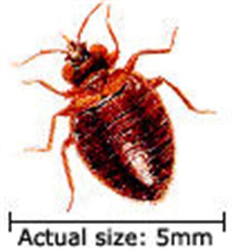 bed bug registry nc bed bugs