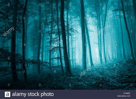 mystic blue color dreamy mystic blue color in magic foggy forest landscape