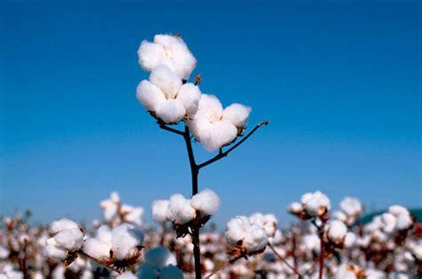 hängematte baumwolle cotone le importazioni cinesi ai livelli pi 249 bassi da