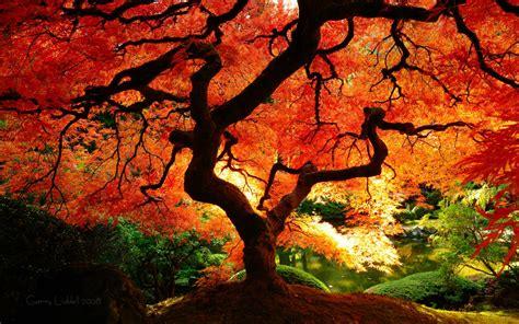 maple tree lifespan autumn equinox kheops international
