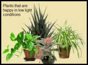 houseplants for low light conditions ten house plants tolerating low light conditions earthdragon s endangered species