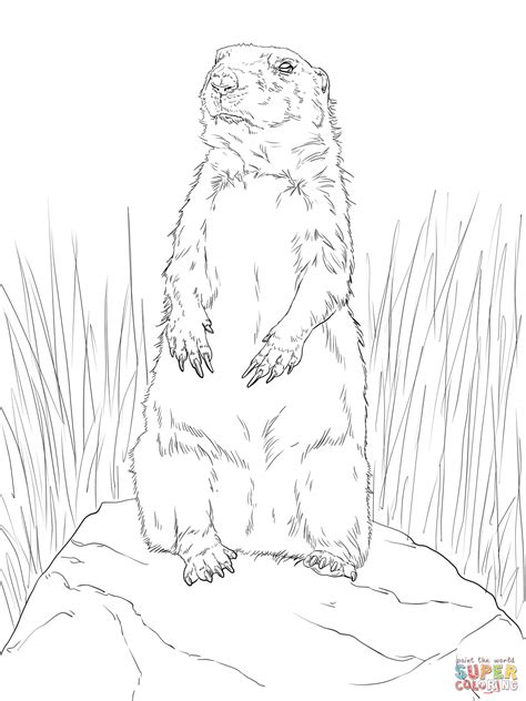 coloring pages of prairie dogs farm animal coloring page free printable baby chicks pages