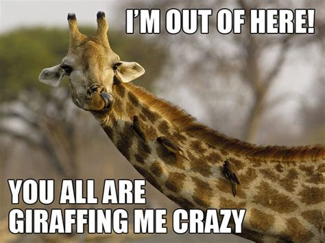 Im Out Meme - im out of here you all are giraffe meme picsmine